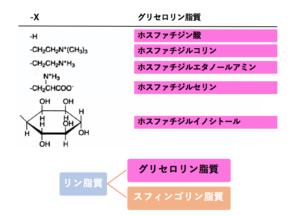 解決】脂質の構造と性質|単純脂...