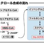 コレステロール合成 メバロン酸からコレステロール合成の反応