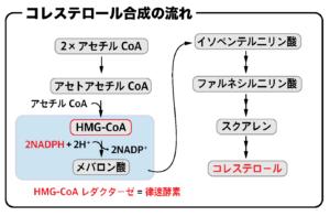 コレステロール合成 HMG-CoAレダクターゼの反応