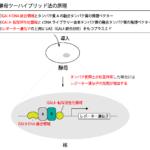 酵母ツーハイブリッド法の原理