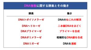 DNA複製を行う5種類の酵素